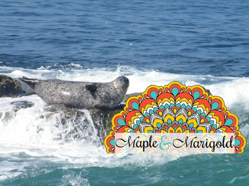 Top 5 reasons to visit San Diego with kids | Best of California Sights | Maple and Marigold