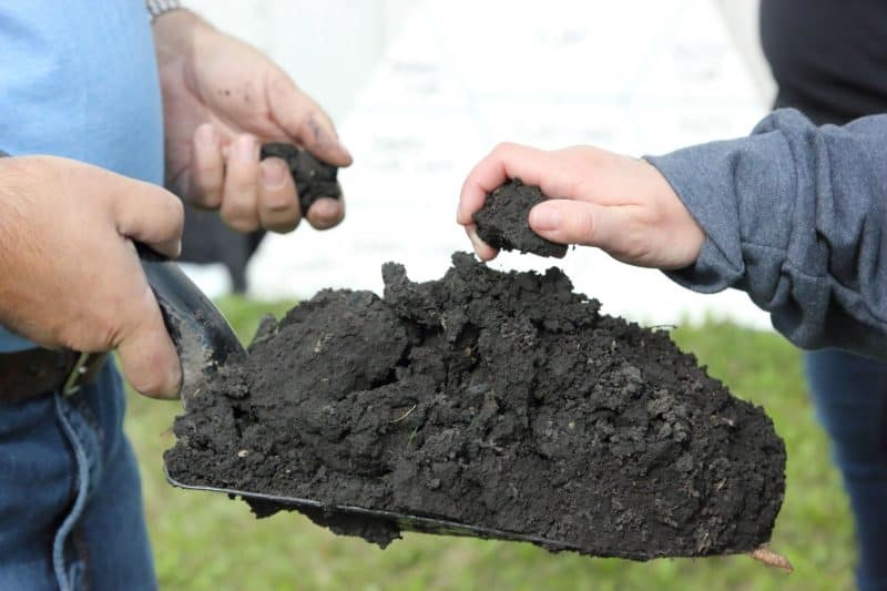 Examining healthy soil at the Canada-Manitoba Crop Diversification Centre, Manitoba