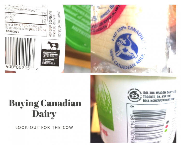 Dairy Diaries | Spot the Dairy Farmers of Canada logo | Maple and Marigold