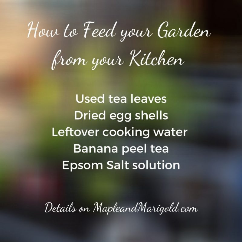 How to Feed your Garden from the Kitchen | Maple and Marigold