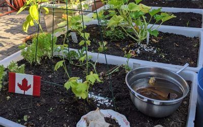 5 Kitchen Hacks to Feed Your Garden