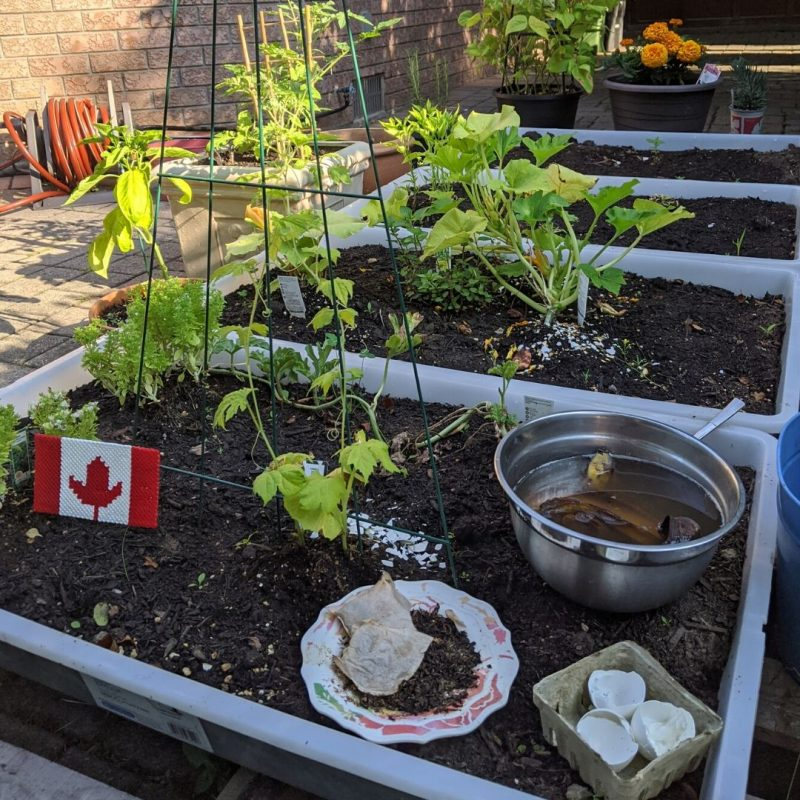 How to Feed your Garden form your Kitchen   Maple and Marigold