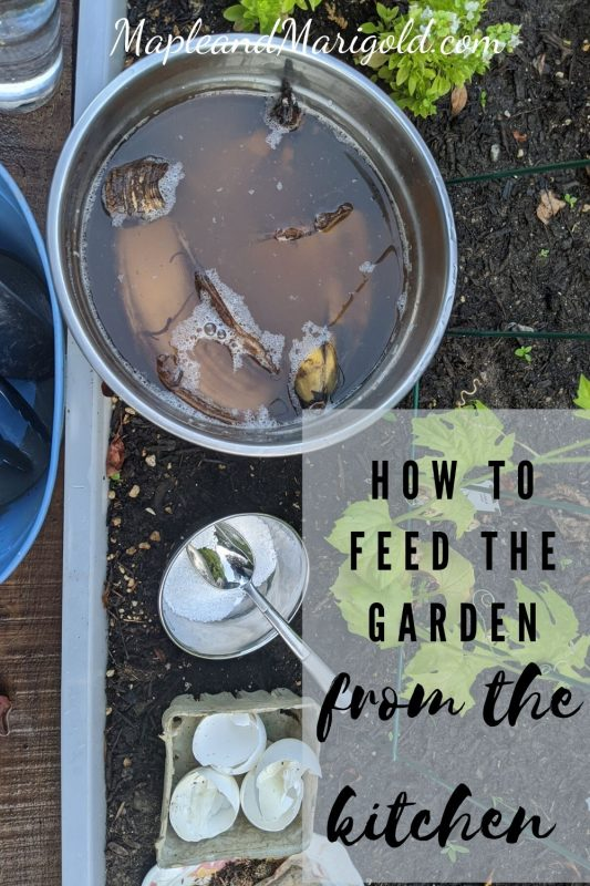 Feed your garden from the kitchen | 5 Kitchen Hacks to feed your garden |  Maple and Marigold