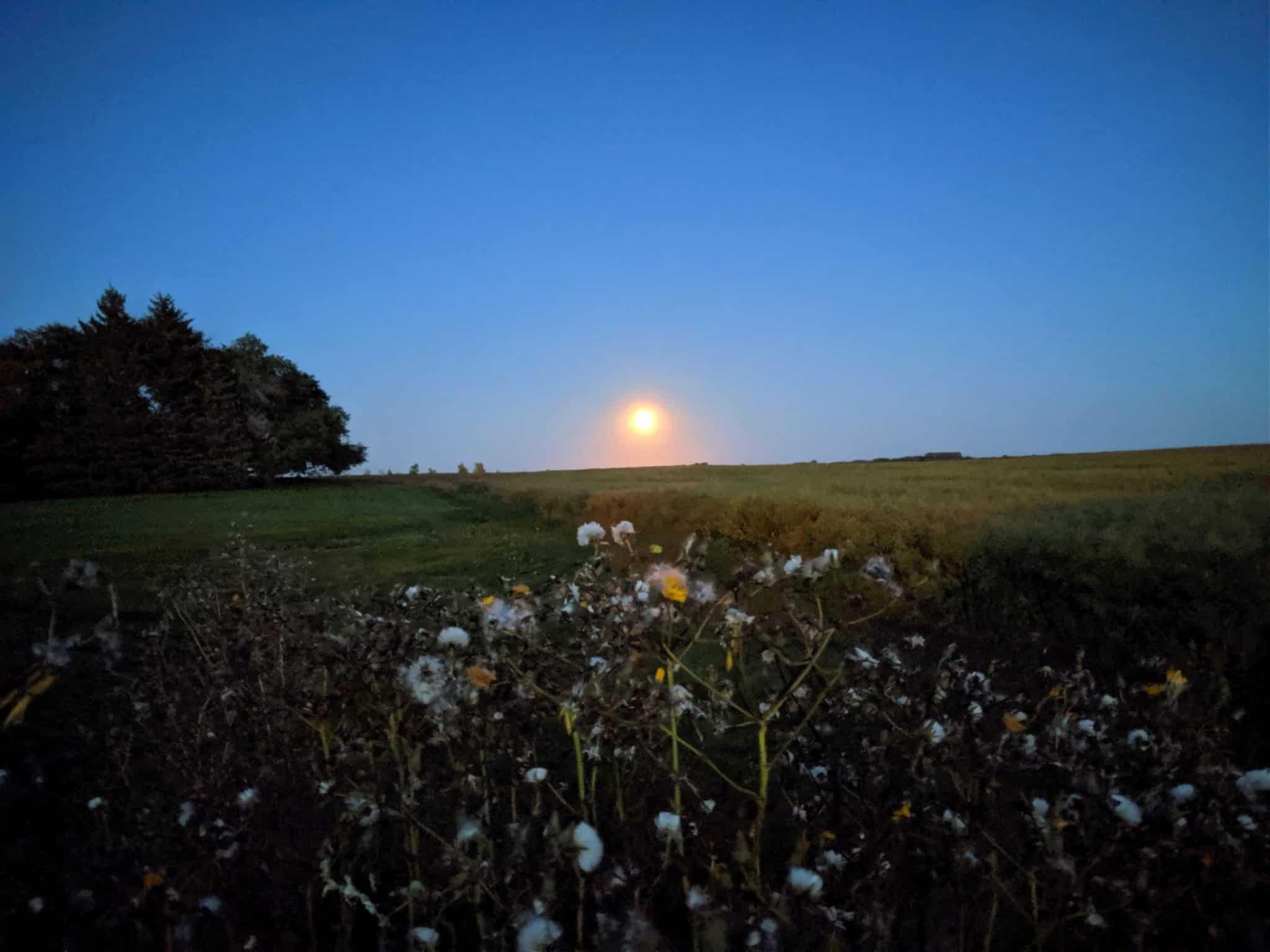 Season of Seva - Support Your Local Farmer